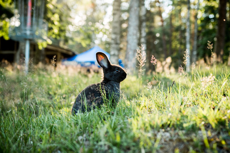 conejo feliz