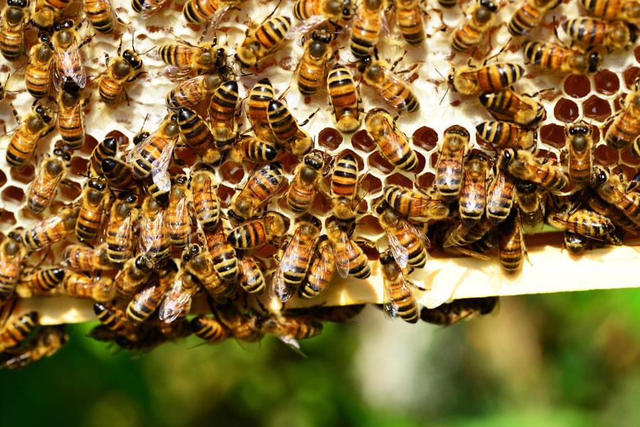 comer miel no es etico