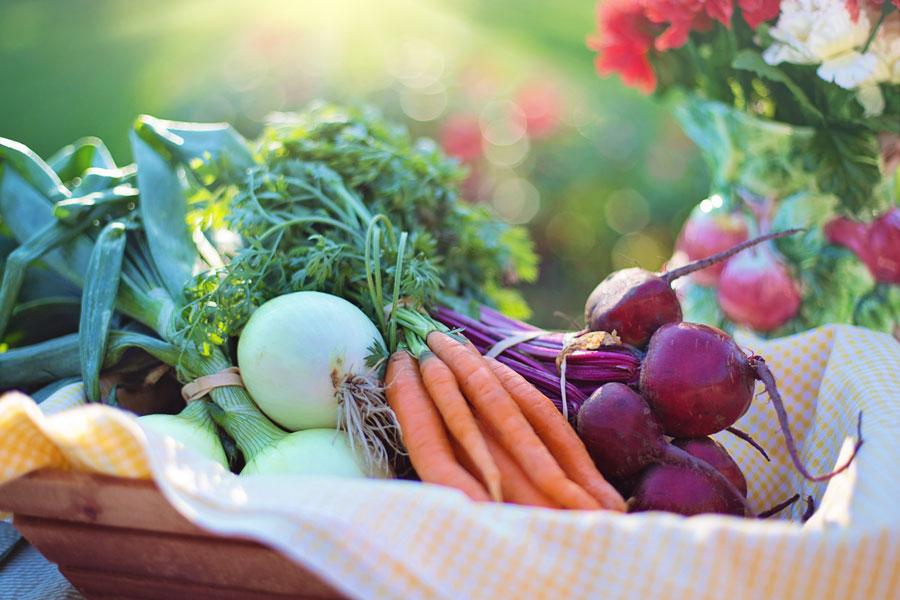 los vegetales no contienen b12