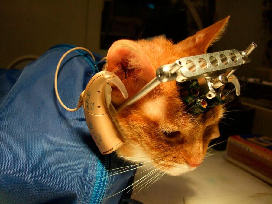 practicas habituales en la experimentacion animal