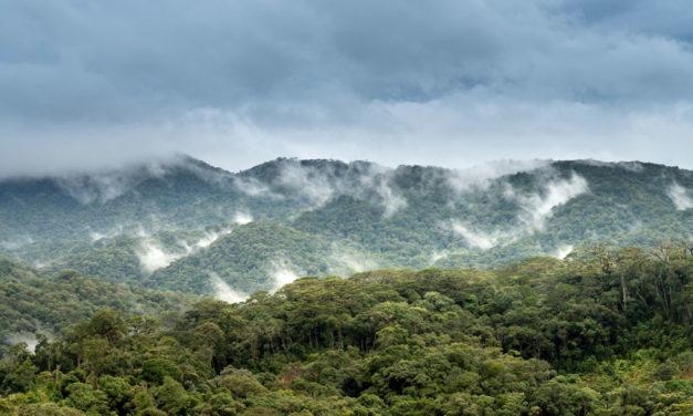 INCENDIOS EN EL AMAZONAS, CAUSAS Y CONSECUENCIAS