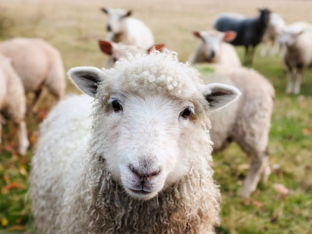por que no comprar lana