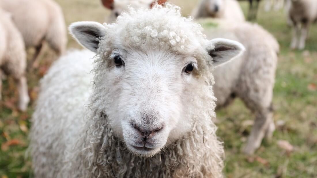 la lana no es etica