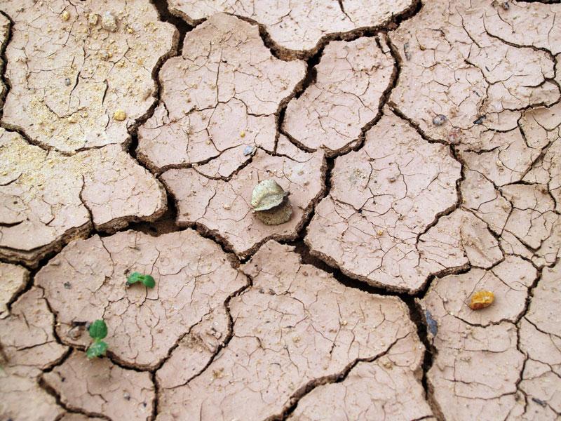 ganaderia y cambio climatico