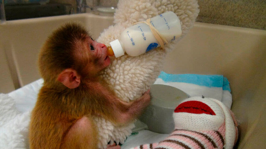experimentacion animal y etica