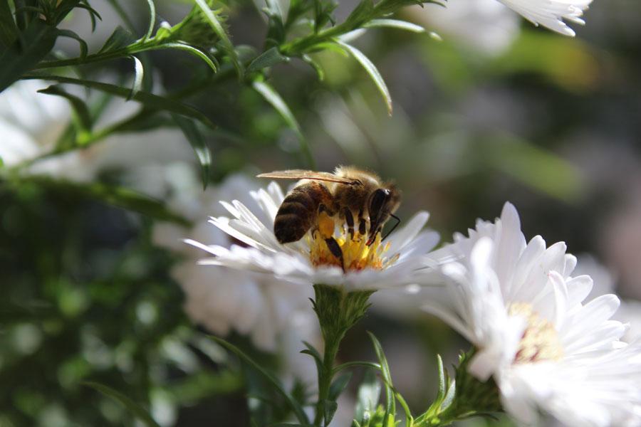 las abejas producen miel para ellas mismas