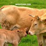 EPISODIO 16 – CALZADO VEGANO, PECES EN UÑAS, GANADERÍA EXTENSIVA Y EXPERIMENTACIÓN ANIMAL | Veganismo y sostenibilidad, el podcast