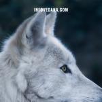 EPISODIO 17 – VOLCANES, LOBOS, VIVOTECNIA, VACUNAS Y UNA CARNICERÍA VEGANA | Veganismo y sostenibilidad, el Podcast