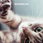 EPISODIO 18 – VEGANSEXUALES, DERECHOS ANIMALES, ACTIVISTAS ASESINADAS Y LAS NEURONAS DE DONALD TRUMP